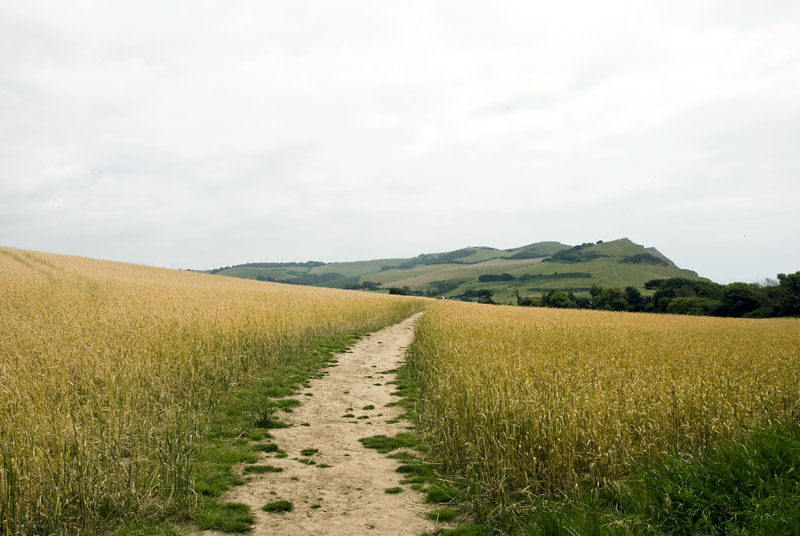 Field, Path, Hill (2009-12)