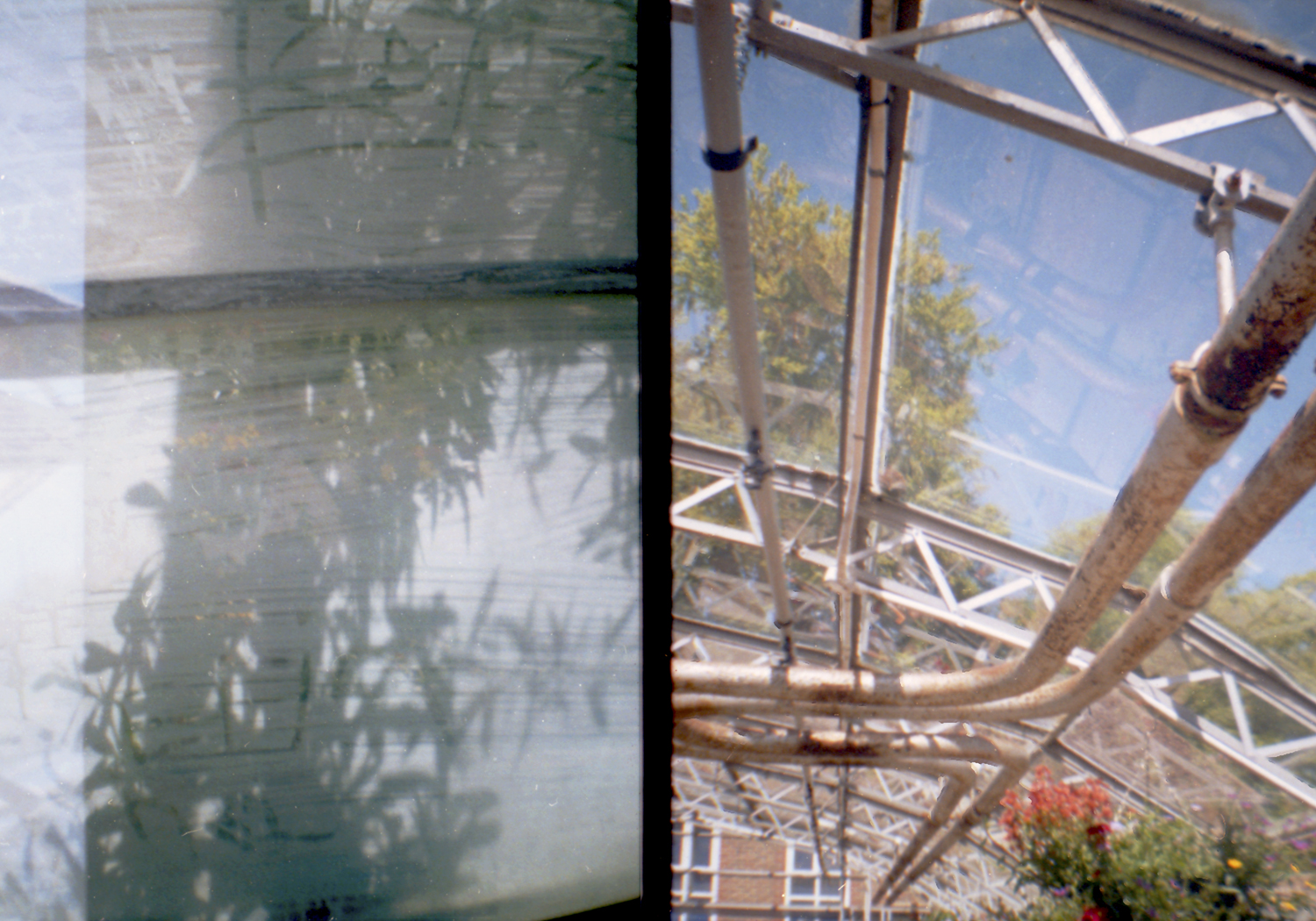 The Greenhouse Effect (Lomofiles) 2012.